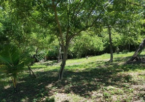 Lush Green Trees Just Minutes walking distance from beach Perfect Homesite